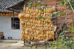 poler för pengzhou för drying för bambuporslinhavre royaltyfria bilder