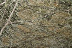 Polerad marmor för regn mest forrest gräsplan Arkivbild