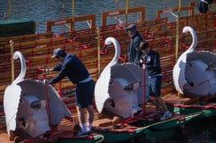 Polerande svanfartyg i Boston den offentliga trädgården Arkivbild