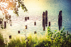 Poles in lake. The poles of an old pier standing in a lake in the summer sun Stock Image