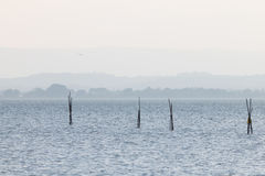 Poles on a lake. Wooden poles on a lake and a seagull flying above, with distant hills in the background, and very soft colors, mostly white and light blue Stock Images