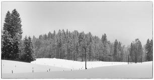 Poles och snö Royaltyfria Foton