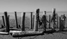 Poles by the seaside Royalty Free Stock Photo