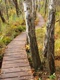Poleski National Park, Poland Royalty Free Stock Photos