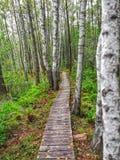 Wooden footpath in Poleski National Park. Poland 2018 royalty free stock photos