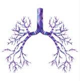 Poli bronco basso umano con la trachea, carina in porpora ed in blu illustrazione vettoriale