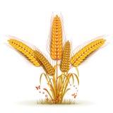 Polia do trigo ilustração royalty free