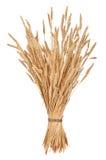 Polia do trigo imagens de stock royalty free