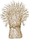 Polia do trigo Imagens de Stock
