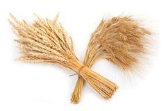 Polia do trigo e do centeio Imagens de Stock Royalty Free