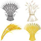 Polia do trigo quatro Imagens de Stock Royalty Free