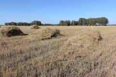 Polias da palha que encontram-se em um campo de inclinação no outono Foto de Stock Royalty Free