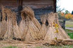 Polias do trigo imagens de stock