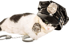 Police cat Royalty Free Stock Photo
