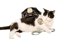 Police cat Stock Photos