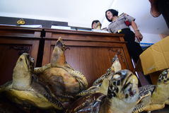 The police confiscated wildlife and biodiversity are traded Stock Image