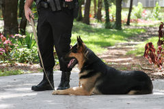 Police Dog 1. A policeman with his police dog Stock Image