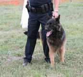 Police Dog. With human partner at demonstration Stock Image