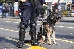 Police dog. A policeman with his police dog Stock Photography