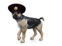 Police dog. A german shepherd dog with a police hat on his head Stock Photo