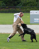 Police dog competition Royalty Free Stock Image