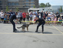 Police Dog Demonstration (1 of 3) Stock Images