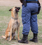 Police Dog and Handler Royalty Free Stock Photos