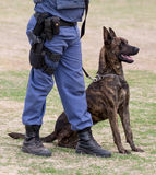 Police Dog and Handler Stock Photography