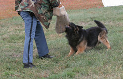 Police dog holds target Stock Images