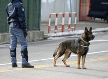 police dog of the Italian police in the city royalty free stock photos
