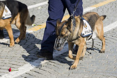 Police dog and the legs of the police Royalty Free Stock Photo