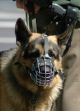 Police dog. MAY 2005 - BERLIN: security measures: a German police shephard dog and a policeman with a gub Stock Images