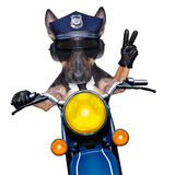 Police dog motorbike. POlICE DOG ON DUTY driving a motorbike with victory peace fingers Royalty Free Stock Image