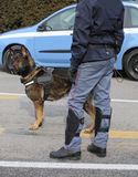 Police dog while patrolling the city streets to prevent terroris Stock Photo