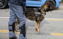Police dog while patrolling the city streets to prevent terroris Royalty Free Stock Images