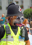 Police dog Stock Image