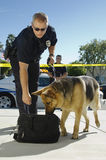 Police Dog Sniffing Bag. Male police officer with trained dog sniffing the bag at crime scene Stock Image