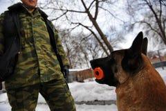 Police dog training. Police dog belgian shepherd Malinois in training center Stock Photo