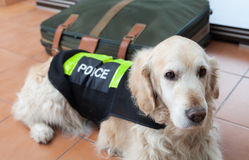 Police Dog With Distinctive Stock Images