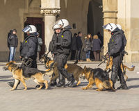 Police  with dogs. Police and dogs in action on the  main market in Krakow. Observation of football fans Royalty Free Stock Images