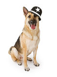 Police German Shepherd Dog Stock Photo