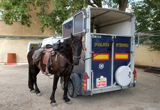 Police horse. BEER SHEVA, ISRAEL - OCTOBER 31, 2017:  Police horse stands next to the van Stock Photo