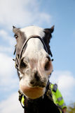 Police horse on duty Royalty Free Stock Image