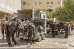 Police horses Streets and houses in Jerusalem. Today. Israel royalty free stock photography
