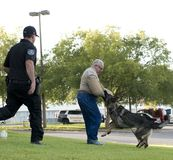 Police K-9 Demonstration. At Escambia County Sheriff in Pensacola, Florida Royalty Free Stock Image