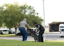 Police K-9 Demonstration. At Escambia County Sheriff in Pensacola, Florida Stock Photos