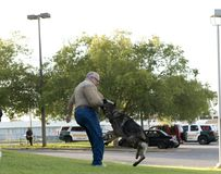 Police K-9 Demonstration. At Escambia County Sheriff in Pensacola, Florida Royalty Free Stock Photos