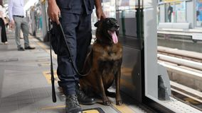 Police Man with Funny Security Dog at Subway Train Station Platform. 4K. Bangkok, Thailand - 04 DEC 2017. Police Man with Funny Security Dog at Subway Train stock video
