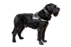 Policedog Imagens de Stock