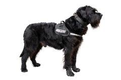 Policedog Images stock